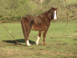 Częściej spotykam konnych niż pieszych:)
