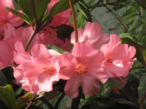 Myślę, że kwiaty lubią siebie -  widzą i doceniają swoje piękno, delikatność, zapach - swoje przejawy życia:)